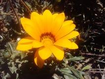 Fleur orange Images libres de droits