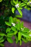 Fleur orange au-dessus du fond de feuille de nature, belles fleurs de image libre de droits