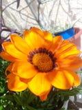 Fleur orange au soleil Photo stock