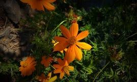 Fleur orange aux arrière-plans de jardin Photos stock