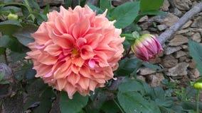 Fleur orange avec la feuille rouge verte Images stock