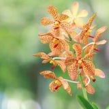 Fleur orange d'orchidée Photos libres de droits