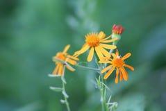 Fleur orange de forêt Photo stock