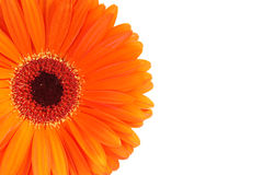 Fleur orange de Gerbera Photographie stock