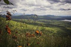 Fleur orange de pinceau sur un dessus de montagne Photographie stock