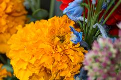 Fleur orange de tagetes dans le bouquet d'automne Images stock