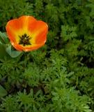 Fleur orange et jaune Photos stock