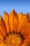 Fleur orange lumineuse Photographie stock