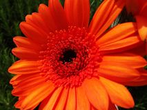 Fleur orange lumineuse Photo stock