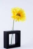 Fleur orange simple de gerbera d'isolement Images libres de droits