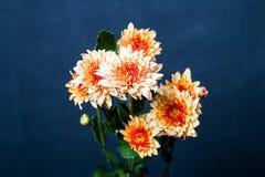 Fleur orange sur le fond noir Photos libres de droits