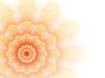 Fleur orange sur un fond gris Images stock