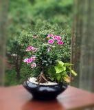 Fleur par la fenêtre Photos stock