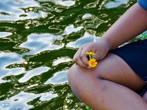 Fleur par le lac Photographie stock