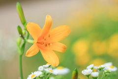 Fleur parfaite Image stock