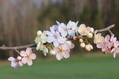 Fleur pendant l'été Photos stock