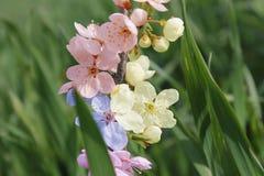 Fleur pendant l'été Photo stock