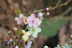 Fleur pendant l'été Photos libres de droits
