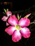 Fleur pendant la nuit Image libre de droits