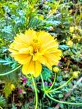 Fleur pendant le matin Photo libre de droits