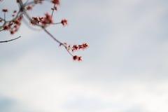 Fleur pendant le premier ressort photos libres de droits