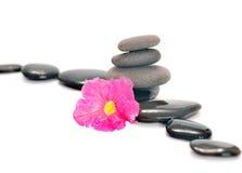 Fleur, pierre Images libres de droits