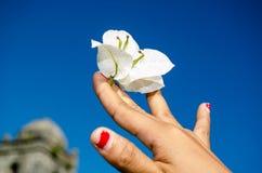 Fleur pour la pensée d'A Photos stock