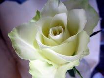 Fleur pour mon plus cher Image libre de droits