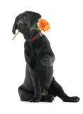 Fleur pour vous Photos stock