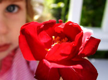 Fleur pour vous Photographie stock libre de droits