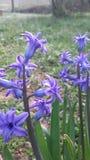 Fleur pourprée images stock
