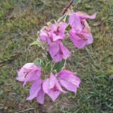 Fleur pourprée photos libres de droits
