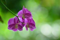 Fleur pourprée d'orchidée Photos libres de droits