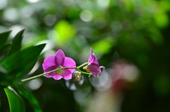 Fleur pourprée d'orchidée Photos stock
