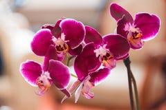 Fleur pourprée d'orchidée photographie stock libre de droits