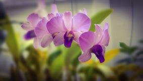 Fleur pourprée d'orchidée Photo stock
