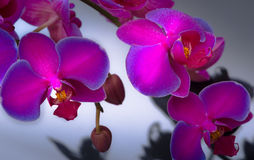 Fleur pourprée d'orchidée Photographie stock