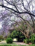Fleur pourprée dans le jardin Photos libres de droits