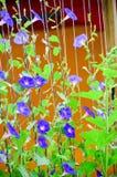Fleur pourprée dans le jardin Image stock