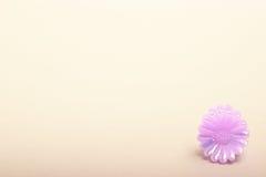 Fleur pourprée de jouet sur le beige photo libre de droits