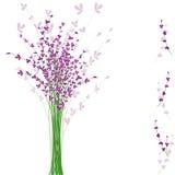 Fleur pourprée de lavande d'été Photographie stock libre de droits