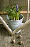 Fleur pourprée de safran Photographie stock libre de droits