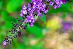Fleur pourprée en automne Image stock