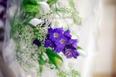 Fleur pourprée Pétales sensibles Photographie stock