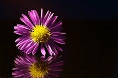 Fleur pourprée reflétée Photos libres de droits