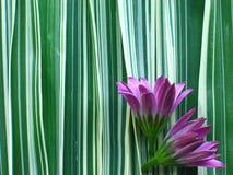 Fleur pourprée sur l'herbe de bande Image stock