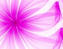 Fleur pourprée très gentille Image libre de droits