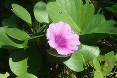 Fleur pourpre à la terre Photographie stock libre de droits