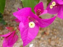 Fleur pourpre Photos stock