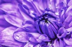 Fleur pourpre photo libre de droits